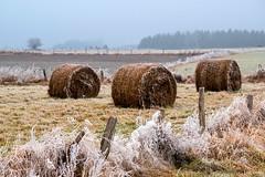 28122016-DSC_0069 (vidjanma) Tags: hiver été boules foin givre