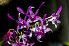 Orchid (rumerbob) Tags: orchid flower floral flowergarden fauna botany botanicalgardens botanical longwoodgardens canon7dmarkii canon100mmmacrolens macro macroflower macrophotography