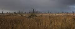 view of Konik Horses (madphotographers) Tags: nature reserve holland flevoland netherlands tree trees oostvaardersplassen nikon d7200 horses konik konikpaarden outdoor grey cloudy