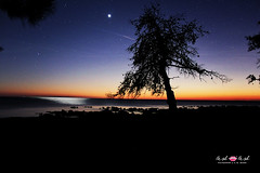 stars (TashTashMe) Tags: review stars fallingstar sunset tree silhouete silhouette venus sun sea coast sky star comet