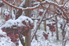 IMG_8426 (Patrick Duric) Tags: winter snow wine grapes badenwutwnberg