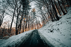 Forest glow (Tim RT) Tags: tim rt reutlingen woodland forest outdoor sun light glow yellow winter snow street hill nature natural landscape wide angle bw germany apsc bautiful awesome shining white fuji fujifilm xt2 x xf1024mm 1024mm new picture flickr photography