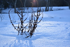 PHO_0175 (Dimi_M) Tags: neige soleil nature foret