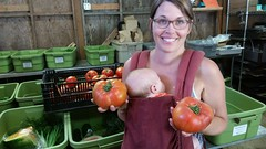 "oh baby! tomatoes are here • <a style=""font-size:0.8em;"" href=""http://www.flickr.com/photos/75400798@N04/32654366781/"" target=""_blank"">View on Flickr</a>"