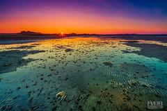 Texel Sunset (Explored) (Frans van der Boom) Tags: fvdb nikon netherlands holland d5200 decisive moment creative flickr flickriver explore best camera prime lens eyed eye scene photography sunset texel water dunes