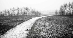 The path You choose (MarxschisM) Tags: bw path fog trees outdoors lonely empty