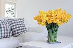 My Private Sunshine (haberlea) Tags: home daffodils flowers plants yellow table athome livingroom bunch vase green white sofa pillows grey savoy alvaraalto