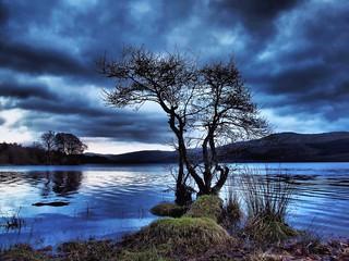 Tree on Loch Tay