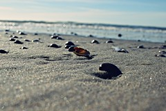 You can never cross the ocean unless you have the courage to lose sight of the shore. (luisa-m) Tags: sea beach nature weather 35mm de spring sand nikon cross shell sunny shore fixed local sight nikkor f18 18 lose length isle texel koog nikond3300 d3300 luisam