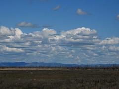 Winton Wetlands and clouds . jpg (Lesley A Butler) Tags: spring australia victoria wetlands wintonwetlands