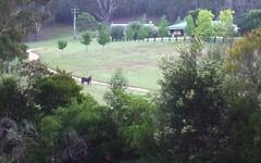 2685 Eurobodalla Road, Nerrigundah NSW