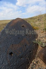 30095287 (wolfgangkaehler) Tags: old horse rock asian ancient asia desert mongolia centralasia petroglyph gobi blackmountains petroglyphs mongolian gobidesert southernmongolia