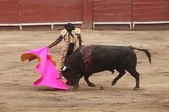 Larga de Talavante en Lima (Vladimir Tern A.) Tags: peru gente lima bulls toros costumbres acho bullfighting bullfighters tauromaquia tradiciones toreros matadores corridasdetoros taurinos plazasdetoros feriataurina culturayarte