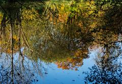 Kilbride Wood (sheedypj) Tags: woods wicklow arklow kilbride
