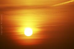 Emsland - Sonnenaufgang_IMG_0155 (milanpaul) Tags: november germany deutschland herbst sonnenaufgang biene emsland lingen niedersachsen gnse 2015 geeste speichersee speicherbecken canoneos60d tamronaf70300mm456dispvcusd