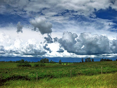 Fluffy Prairie Clouds (erykah36) Tags: blue trees sky white canada storm green nature field clouds fence landscape countryside open farm country meadows fluffy stormy alberta evergreens carvel rolling grassy opencountry priaires