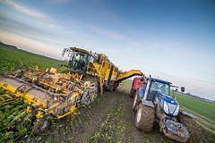 3U4A1541 (Bad-Duck) Tags: vinter traktor mat ropa hst ker betor maskiner kvll skrd flt jordbruk grda lantbruk rstid livsmedel sockerbetor fltarbete livsmedelsproduktion betupptagare omstndigheter