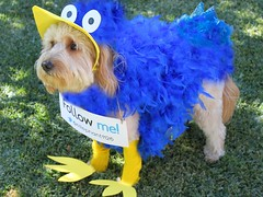 ellie-the-twitter-bird--shes-one-of-riley-and-chewys-girls_10600617333_o