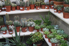 Cacti and succulents (ucalyptis) Tags: cactus plants green london leaves cacti garden botanical flora desert grow greenery spines succulents desertplants iamacamera plantshop plantpower plantsarefriends