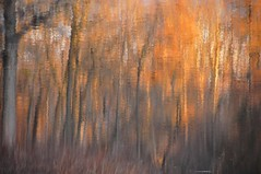 watercolor (christiaan_25) Tags: trees light abstract color reflection nature water colors woods explore trunks 230 renoir dec102015