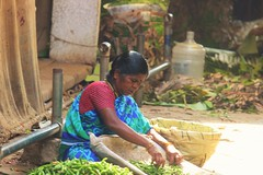 Focused (bluelotus92) Tags: people woman india market marketplace karnataka mysore chillies greenchillies mysuru womanseller devarajursmarket devarajaursmarket