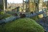 """Mossiga stenar vid """"Gamla ladan"""" #6-2 (George The Photographer) Tags: södermanland sweden nykvarn sten trädstam trädstammar lövskog asp dunge natur mossa mjukt höst svamp träsvamp rutten ladvreta se"""