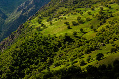 KNA_5796 (koorosh.nozad) Tags: lorestan iran ir isfahanprovince dehshahi absefidwaterfall ab sefid abe persia persien landscape