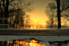 start close in (joy.jordan) Tags: puddle reflection 180rotation sunset trees snow asphalt winter poetry