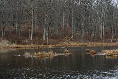 DSC00635-4 (romype77) Tags: sony a6000 ilce6000 pz 1650mm f3556 oss bear mountain state park new york bearmountain newyork wildlife nature natura panorama sevenlakes seven lakes water acqua lago lake bosco forest deer cervo cervi leaf leaves foglia foglie baita cabin albero alberi tree trees animale animali winter inverno flora fauna prato prati erba grass green verde roccia pietra stone rock rocks wood legno albergo hotel inn building edificio brook ruscello fiume hudson river