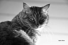 Orty (stefano.chiarato) Tags: orty gatti cats animali