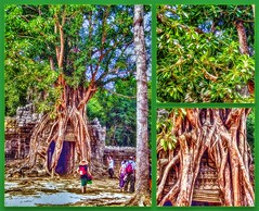 Leaves and roots (Foto&Grafica 2D/3D) Tags: angkorwat siemreap cambodia