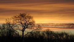 Am Morgen - ein Knick im Gegenlicht; Bergenhusen, Stapelholm (12a) (Chironius) Tags: stapelholm wohlde schleswigholstein deutschland germany allemagne alemania germania германия niemcy himmel sky ciel cielo hemel небо gökyüzü sonnenuntergang sunset atardecer tramonto zonsondergang закат dämmerung dusk schemering crépuscule crepuscolo abend evening abends wolken clouds wolke nube nuvole nuage облака gegenlicht silhouette fagales eiche baum bäume tree trees arbre дерево árbol arbres деревья árboles albero árvore boom baumsilhouette explored