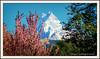 Mt. Machhapuchre (Mt. Fishtail ) #Nepal (IshworAD) Tags: mountain mountains mtfishtail mtmachhapuchre himal trekking trekkingnepal travelling advanture tadapani photography annapurnacircuittrekking trekkinginnepal outdoor landscape sony sonycamera nepal photoborder border