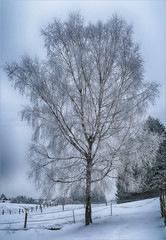 Winter tree (berndkru) Tags: canonpowershotg7xmarkii tree baum egglburgersee winter schnee snow nature natur landschaft landscape