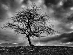 long cold winter [e x p l o r e d] (HJK Photography) Tags: mono monochrome winter tree black white bw iphone texture somber iphone7 solo solitude lowkey contrast snow sky clouds blackandwhite explore entdecken