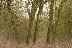 20170104-_IMG0936-Edit (fleetingphotons) Tags: pentaxk1 smcpentaxa200mmf28ed wasingestate fishing warrenbeat kennet trees