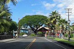 Banyan tree on Ali'i Drive (BarryFackler) Tags: kailuakona hawaii outdoors bigisland westhawaii hawaiiisland hawaiicounty aliidrive kona sandwichislands hawaiianislands polynesia tropical scene scenery 2017 banyantree seawall street palmtrees road driving people sunny sunnyday rockwall utilitypole streetlights arbor clouds sky cars vehicles shops stores barryfackler barronfackler signs outdoor