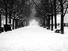 la sortie vers le printemps? (photosgabrielle) Tags: photosgabrielle monochrome blackwhite city urban winter snow hiver neige urbain noiretblanc