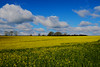 Fields Of Yellow & Skies Of Blue (Nick Fewings 4.5 Million Views) Tags: dorset rapeseed sky clouds yellow blue green white field crop wimborne st giles nickfewings uk canoneos7dmarkii landscape