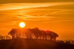 Winter's Dawn, Billinge, Merseyside, UK (ianbonnell) Tags: northwestengland greatbritain britain uk england serene wigan sthelens lancashire merseyside billinge landscape trees sun dawn sunrise