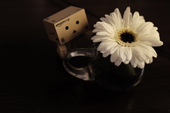 sorry... I should take your picture earlier/早く撮らなくてごめんね (kurupa_m) Tags: gerbera flower plant xt10 white ガーベラ 白