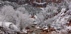 Virgin River Pano - Zion National Park (CloudRipR) Tags: snow white red water river stream rocks trees virginriver zionnationalpark utah nikon d810 nikkor daarklands