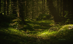 Into the woods (sisterssinister) Tags: outstandingforeignphotographersvisitingromania