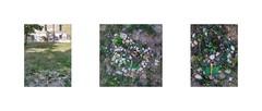 """Aktion Narrenturm weben Necklace """"In Memory of the little trees"""" at the crime scene, Work in Progress 9-11/12 am Tatort: Collier zur Erinnerung an die Bäumchen, die nicht wachsen durften. Bilderzyklus Juli August Tagebuch diary 1. 8. 2015 (hedbavny) Tags: vienna wien wood morning shadow tree brick green broken stone akh carpet austria design sketch österreich diary workinprogress scene sketchbook memory rug grün weaver holz stein morgen schatten weave schiff tagebuch baum nhm bunt weber tapestry aktion mauer teppich handwerk erinnerung textileart anleitung narr brache procrustes workingroom narrenturm werkstatt ziegel tapisserie gugelhupf szene entwurf skizze pasin arbeitsraum aakh alsergrund handarbeit weben skizzenbuch fibreart maigrün provisorisch aktionismus stifter textilkunst bilderzyklus prokrustes musterbogen teppichweber hedbavny pathologischanatomischesammlungdesnaturhistorischenmuseums ingridhedbavny"""