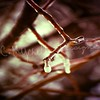 Frozen (c.mychelledesigns) Tags: life winter cold nature beautiful waterice treebranch