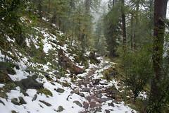 Nationalpark Hohe Tauern in der Umgebung der Rudolfshtte am Weisee-bw_20150926_2689.jpg (Barbara Walzer) Tags: uttendorf nationalparkhohetauern weissee gletscherwelt berghotelrudolfshtte weisseegletscherwelt alpinzentrumrudolfshtte 260915