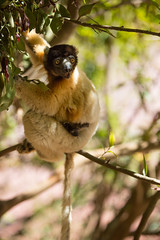 LEMUR-PARK-65 (RAFFI YOUREDJIAN PHOTOGRAPHY) Tags: park city travel trees plants baby white cute green animal fauna canon river jumping sweet turtle wildlife bricks mother adorable adventure explore lemur 5d lemurs bushes madagascar 70200 antananarivo mkiii