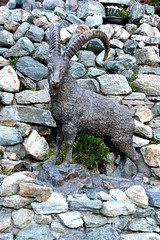 Switzerland-02210 - Ibex