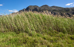 Tall Grasses & Kelinrivier Mountains (chasingthelight10) Tags: africa travel mountains nature hermanus southafrica photography landscapes countryside events lakes meadows places stanford vistas hermanuslagoon kleinriverlagoon