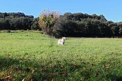 Okupa's sunday morning (nufishaun) Tags: naturaleza pets dogs animals paisaje perros animales